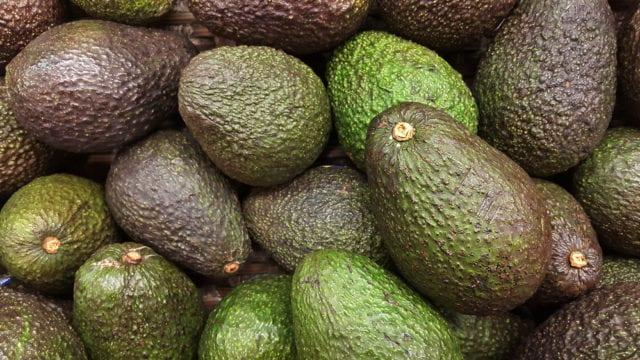 Avocado Update February 2020